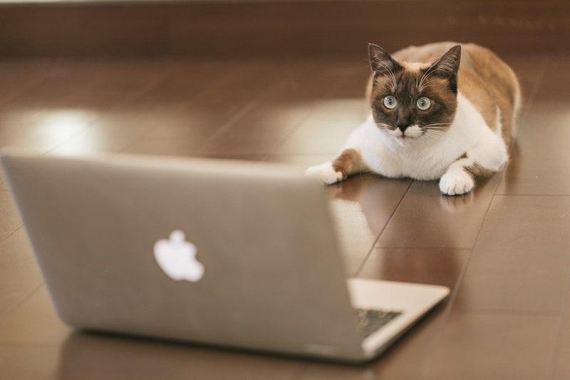 【TIPS】MacBook Airの底ネジをなくしたら・・・【代用OK】